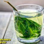Qual o melhor horário para tomar o chá verde para emagrecer?